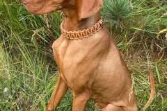 Hundehalsband-3-cm-verstellbar-Leder-Mandel-Bonnie
