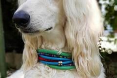 Hundehalsband-6-cm-breit-Zugstopp-Afghane-David
