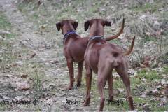 Hundehalsband-Ohrtunnel-Arisha-und-Chumba