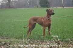 Hundehalsband-Leder-Mix-mit-5-Ohr-Tunnel-im-Leo-Look-CHUMBA-4
