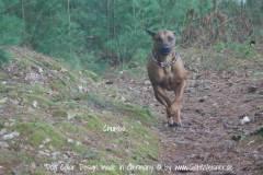 Hundehalsband-Leder-Mix-mit-5-Ohr-Tunnel-im-Leo-Look-CHUMBA-5