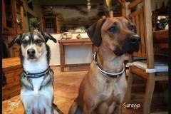 Hundehalsband-Leder-Mix-mit-5-Ohr-Tunnel-im-Leo-Look-Surayya-1