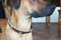 Hundehalsband-Leder-Mix-mit-5-Ohr-Tunnel-im-Leo-Look-Surayya-2
