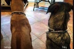 Hundehalsband-Leder-Mix-mit-5-Ohr-Tunnel-im-Leo-Look-Surayya-4
