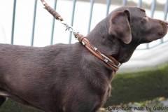 Hundehalsband_Leder_Labradorl_Tula