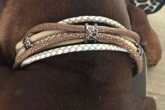RHODESIAN-Ridgeback-Halsband-Simba-5