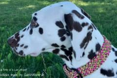Hundehalsband-Melone-3-cm-breit-stufenlos-noia