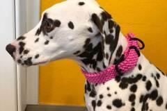 Hundehalsband-Paracord-Pink-3-cm-breit-stufenlos-verstellbar-Noia-1