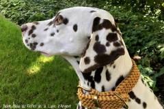 Hundehalsband_dalmatiner_honig_noia_1