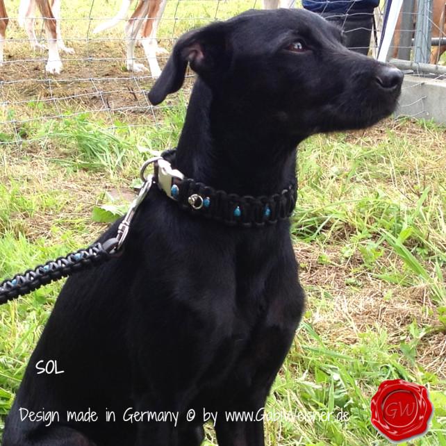 Lederhalsband mit Leine im Set für kleine Hunde