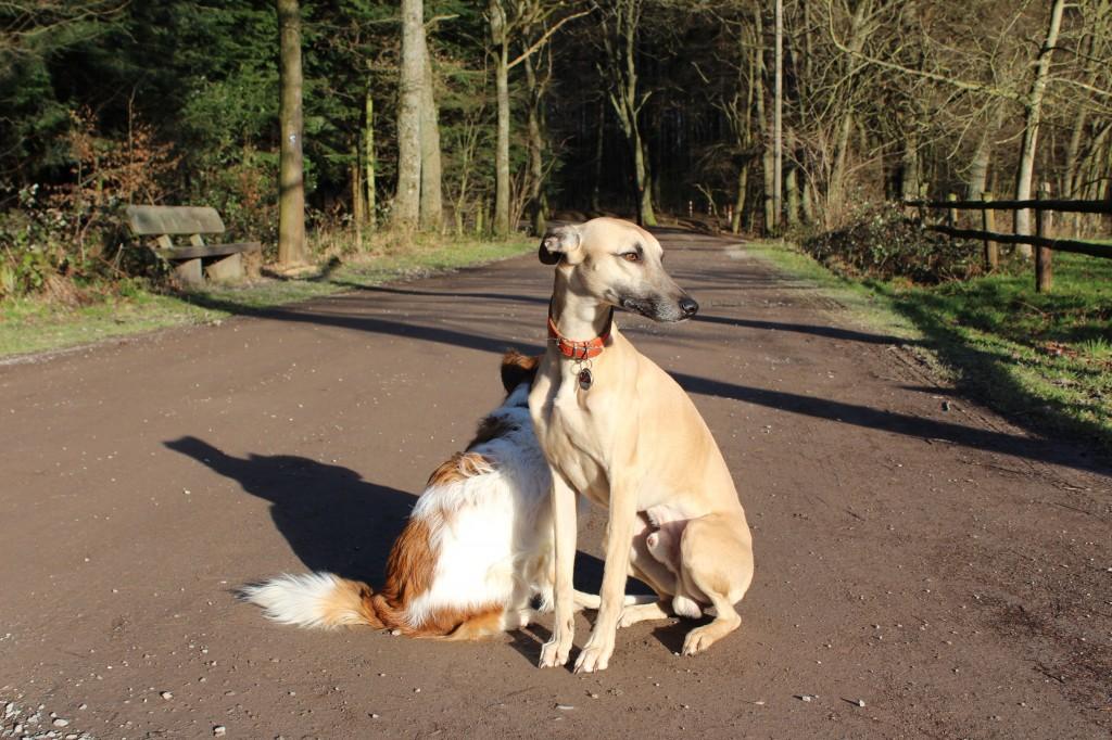 Weise Hunde – Emile und Bijou als Spiegel meiner Seele