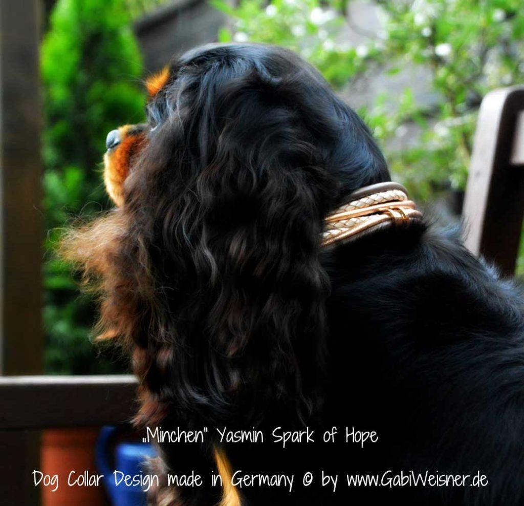 Luxus für kleine Hunde