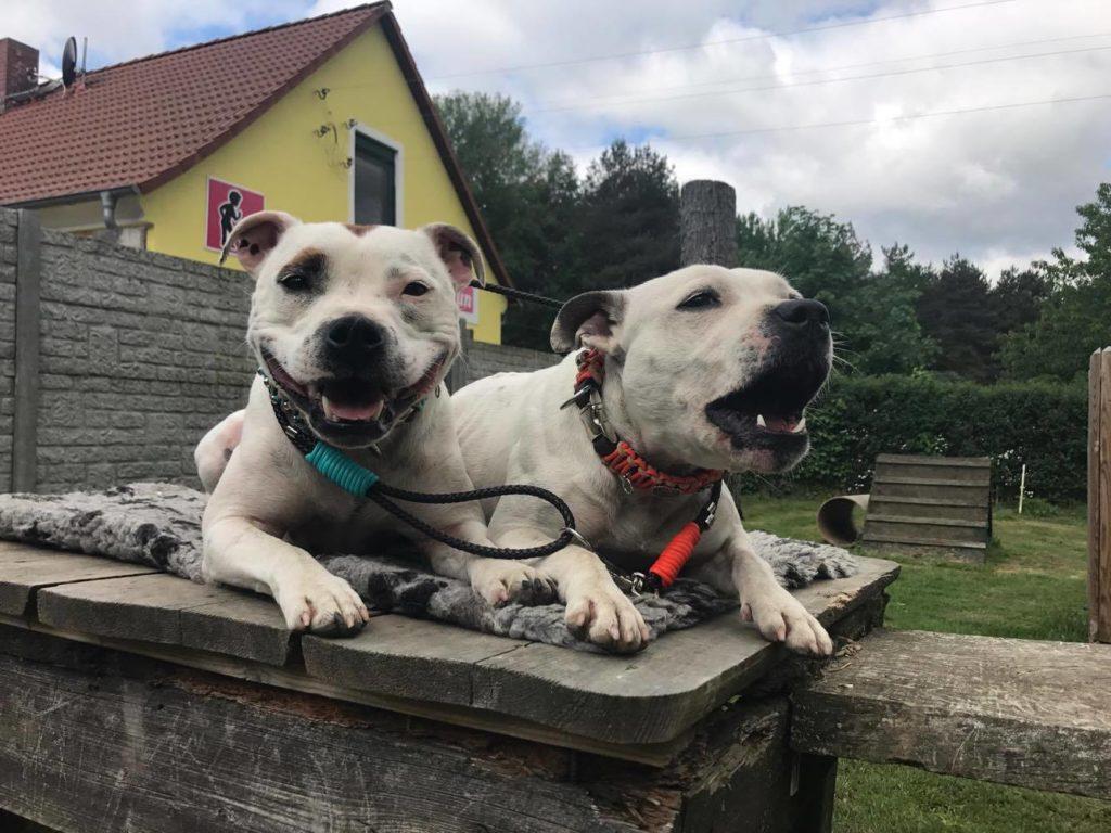 Neue Hundehalsbänder im Leder Mix