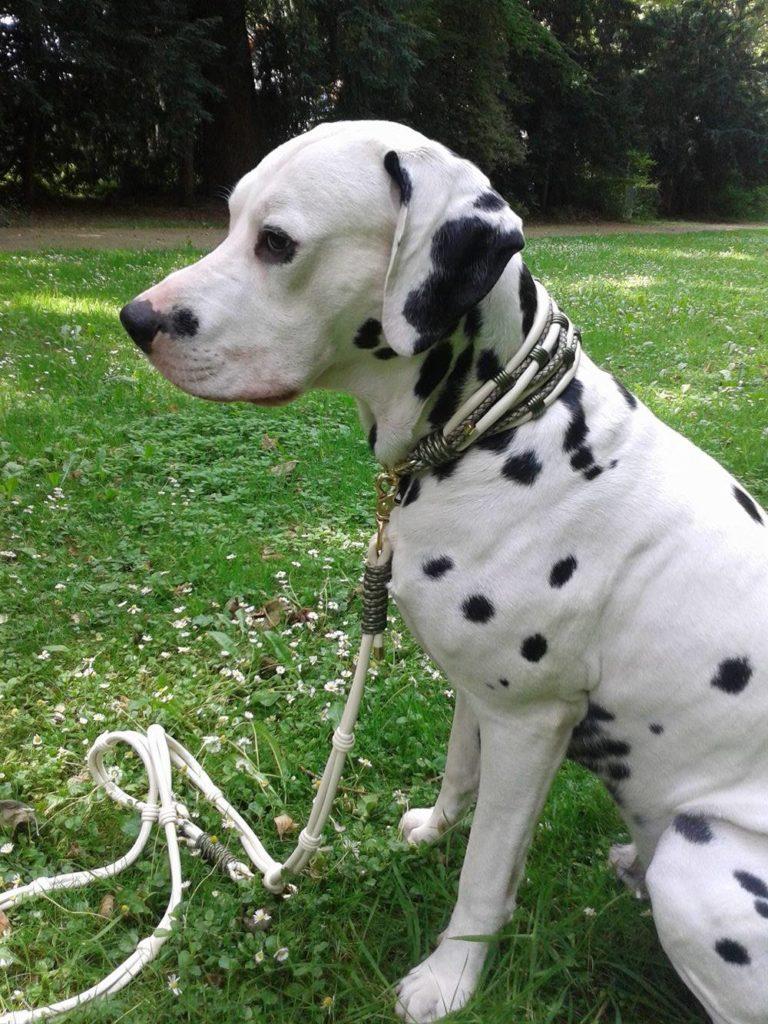 Hundehalsband Extra breit