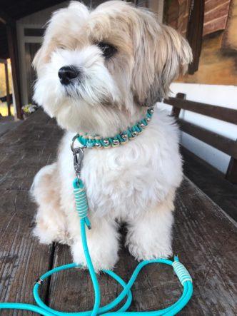 Exklusive Hundeleine und Hundehalsband Leder rund Türkis