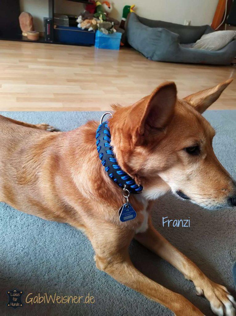 Hundehalsband Blau Royalblau Leder